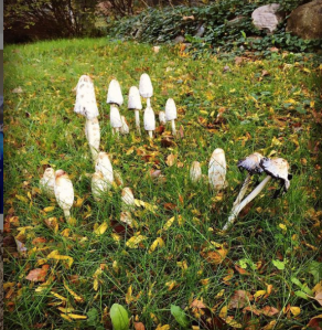 Fairytale mushrooms spotted in real life.